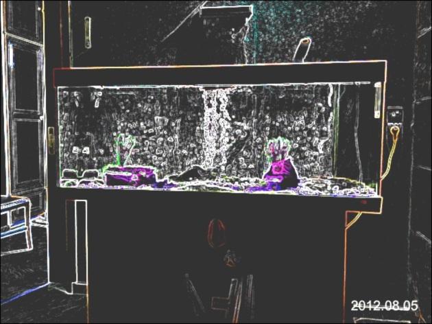 my-aquarium